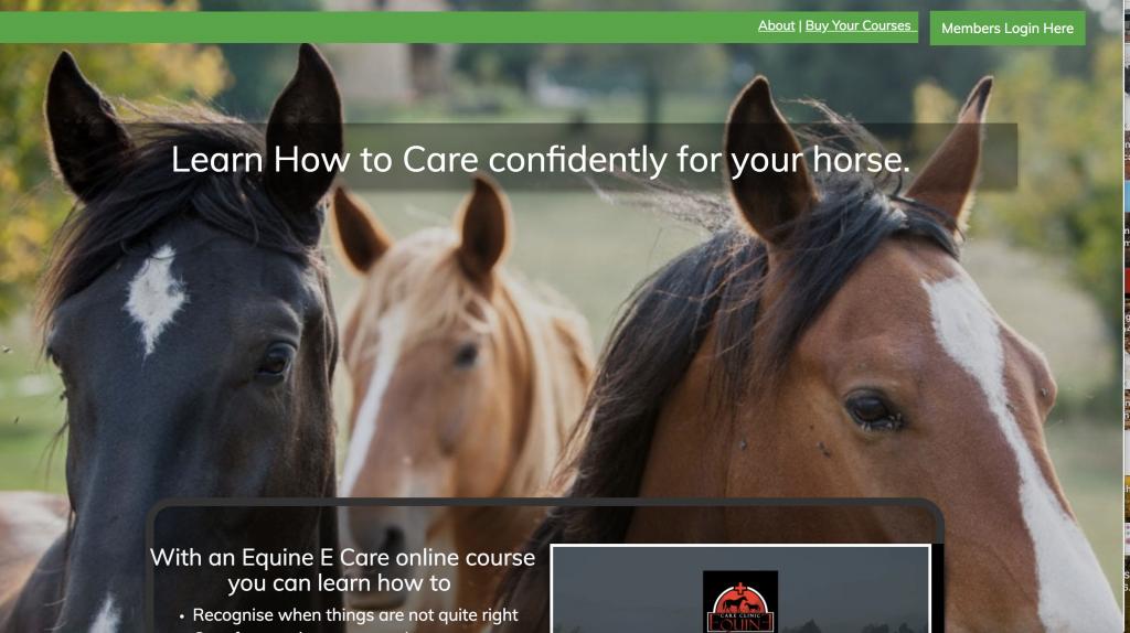 website, equine website, Digital assets